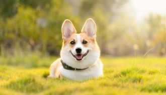 Darmowe czipowanie psów