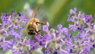 """Konkurs """"Tajemniczy ogród dla pszczół i dzikich zapylaczy"""""""